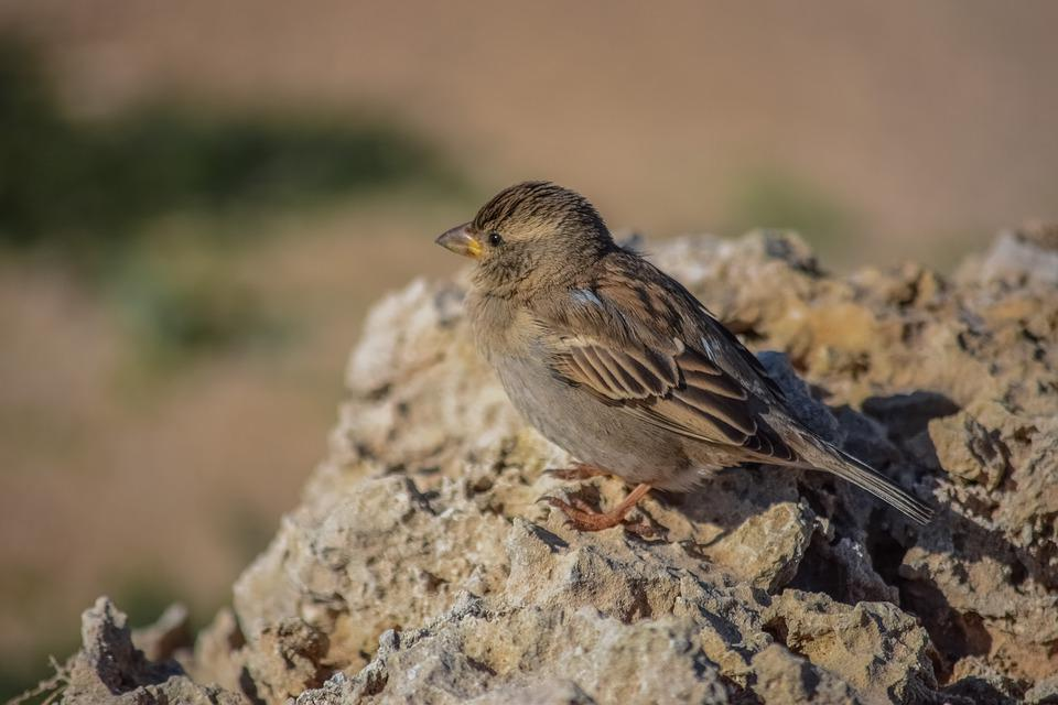 Sparrow, Nature, Bird, Wildlife, Outdoors, Animal, Wild