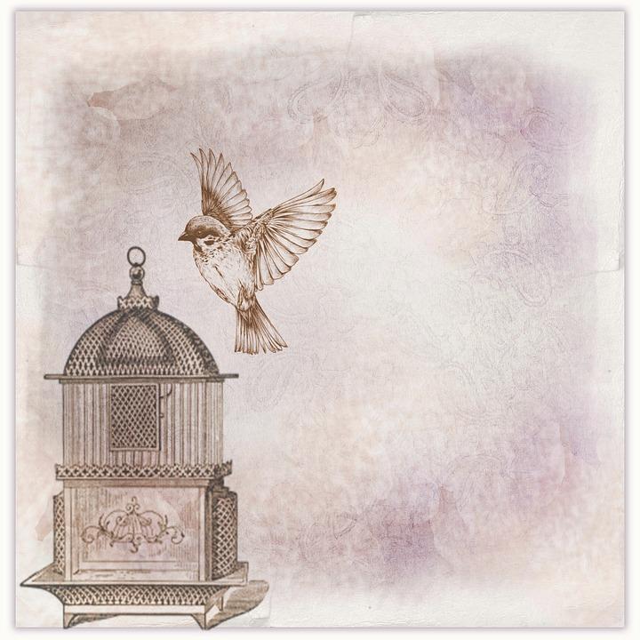 Scrapbook, Page, Background, Bird, Cage, Bird Cage