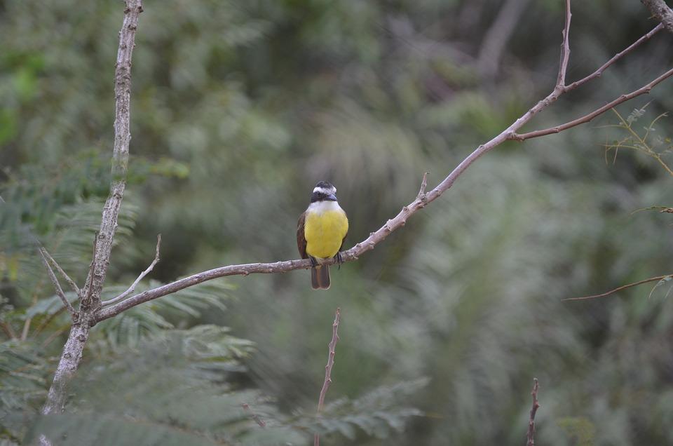 Paige, Nature, Bird, Tropical Birds, Animals