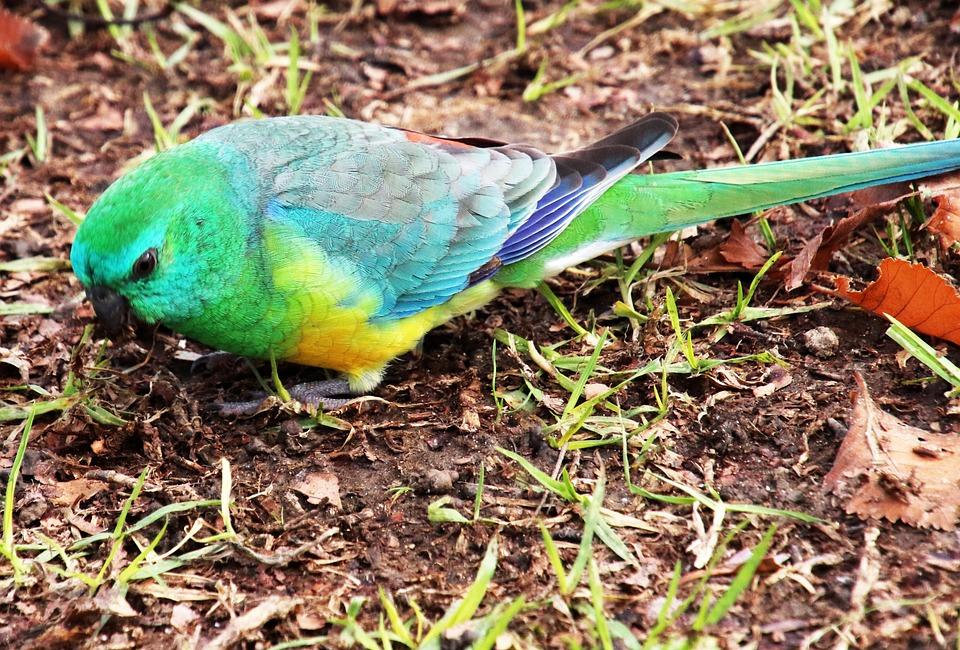 Parrot, Green, Bird, Feeding, Wildlife, Park, Nature
