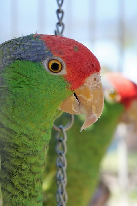 Parrot, Nature, Bird, Bird Lover, Wilderness, Tropical