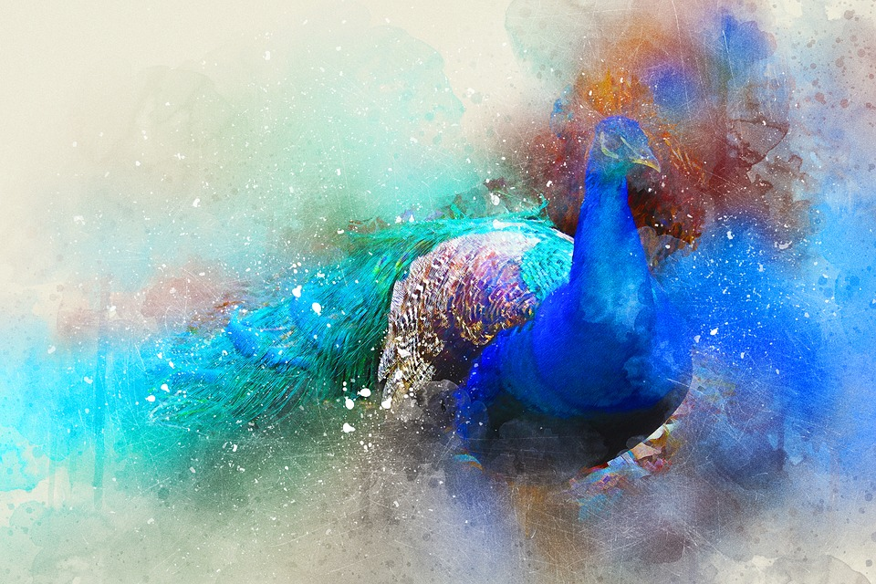 Bird, Peacock, Feathers, Art, Abstract, Watercolor