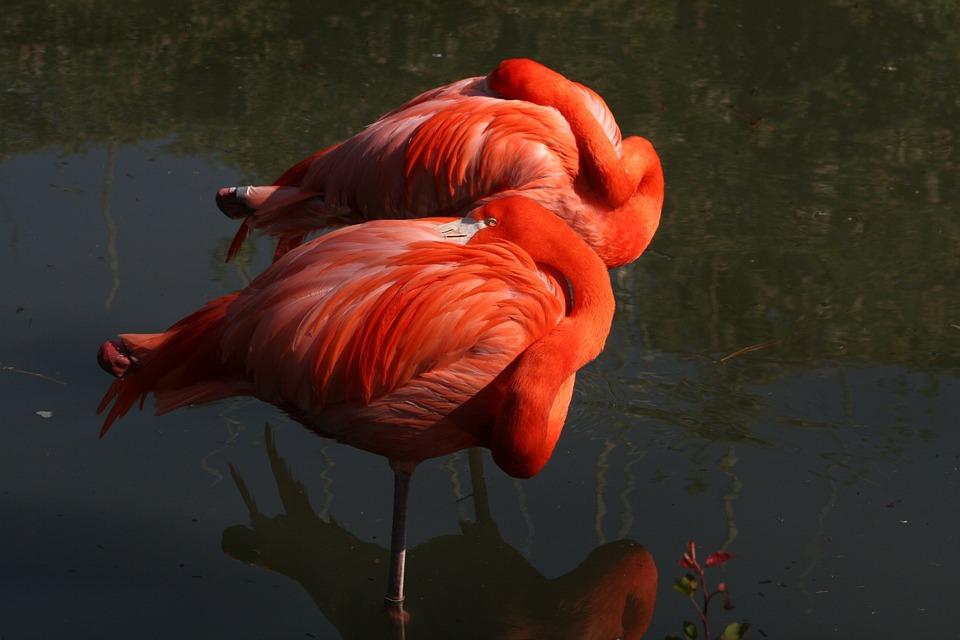 Water, People, Lake, Bird, Nature, Outdoors, Flamingo