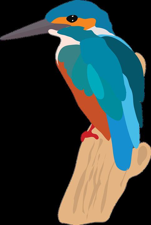 Kingfisher, Bird, Branch, Animal, Wildlife, Perched