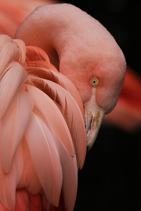 Flamingo, Bird, Zoo, Pink, Feathers, Phone Wallpaper