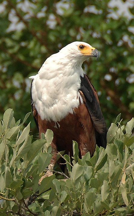 Bird, Nature, Animal, Fly, Beak, Waters, Wing, Plumage
