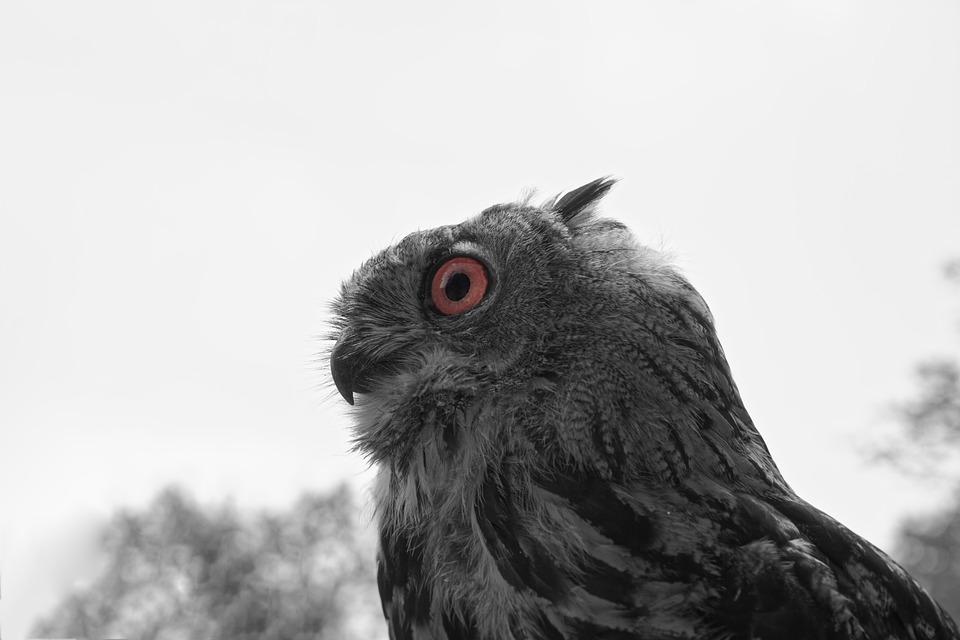 Owl, Eagle Owl, Bird, Nature, Feather, Plumage