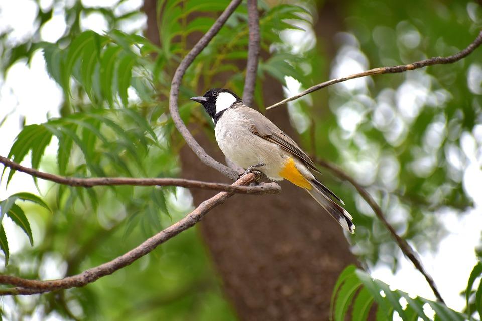 Bird, Nature, Branch, Animal, Plumage, Feather