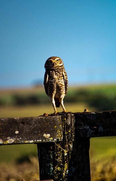 Owl, Bird, Animal, Forest, Predator