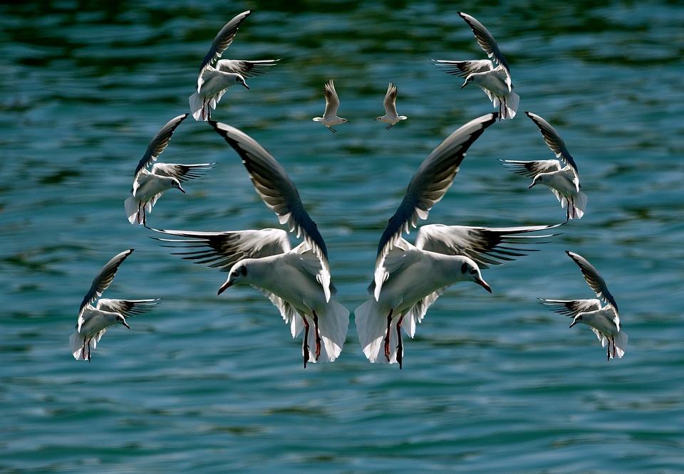 Bird, Prom Gulls Beach Island Of Oleron