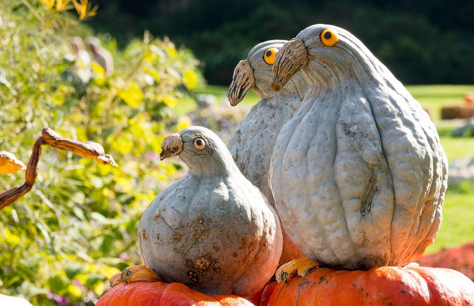Figures, Pumpkin, Grey, Bird, Decorative, Dove, Thick