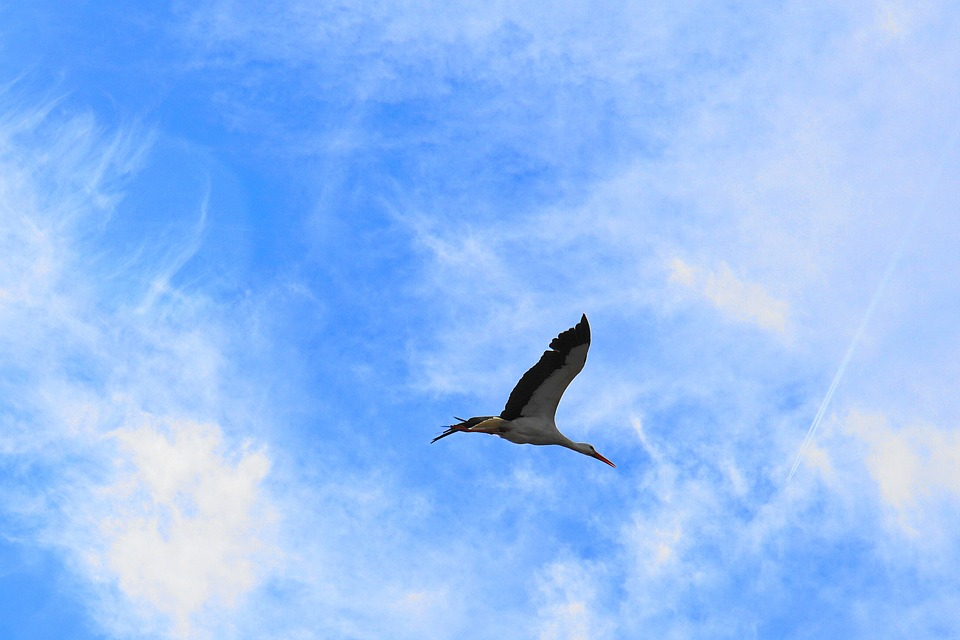 Stork, Bird, Flying, Sky, Clouds, Rattle Stork, Baby