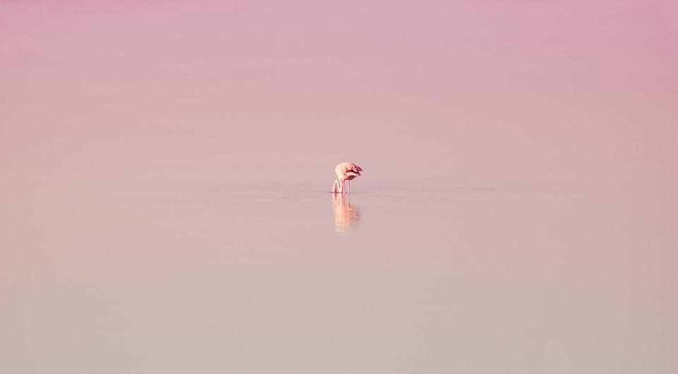 Flamingo, Flamenco, Bird, Feathers, Reflection, Nature