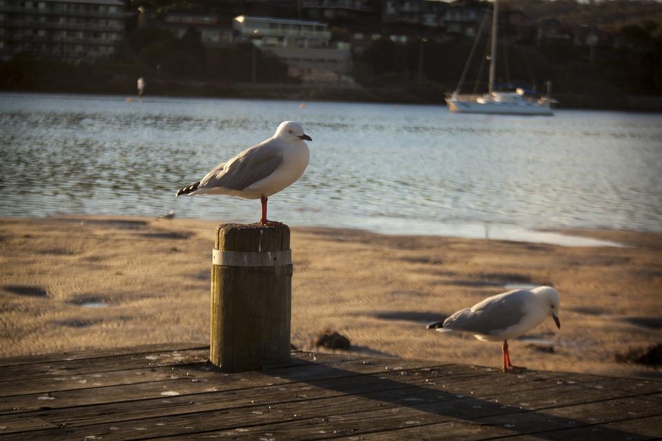 Bird, Water, Lake, Feather, River