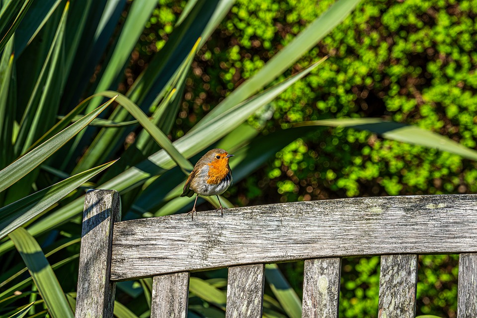 Robin, Bird, Nature, Spring, Garden, Plants, Green