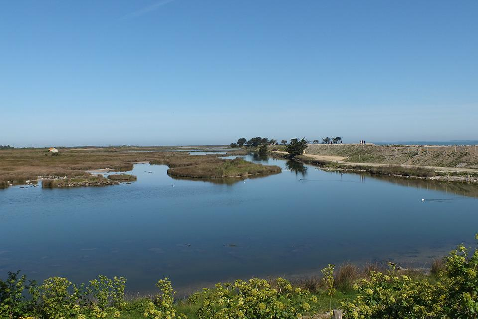 Noirmoutier, Bird Sanctuary, Water
