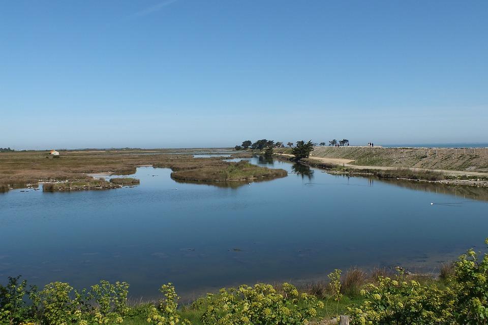 Noirmoutier, Bird Sanctuary, Water