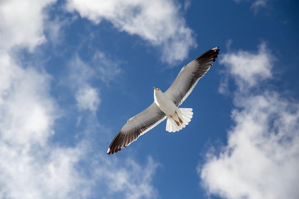 Seagull, Norway, Nature, Oslo, Bird, Scandinavia