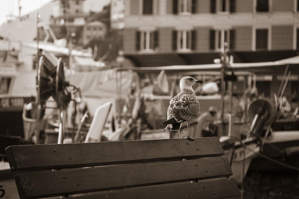 Seagull, Bird, Harbor, Pier, Wildlife, Black And White