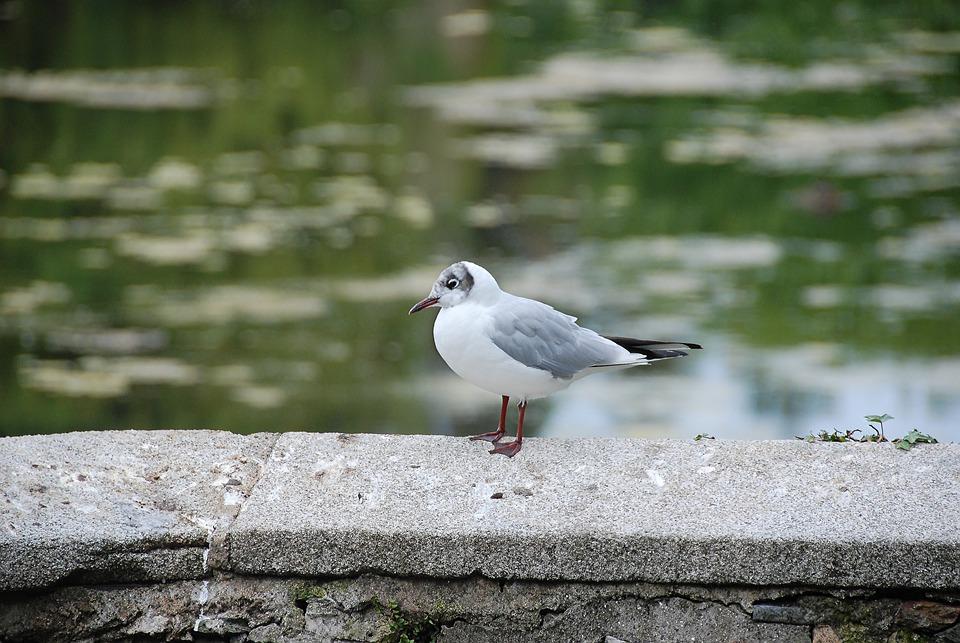 Seagull, Water Bird, Bird, Animal, Wall