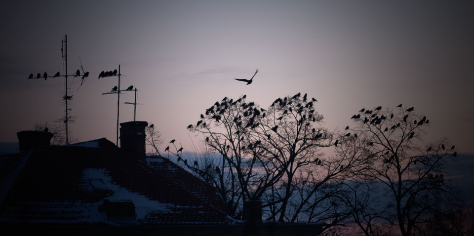 Winter, Bird, Roof, Nature, Season, Tree, December
