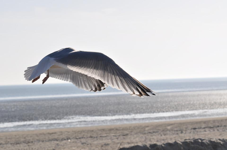 Seagull, Beach, Flight, North Sea, Birds, Sky, Bird