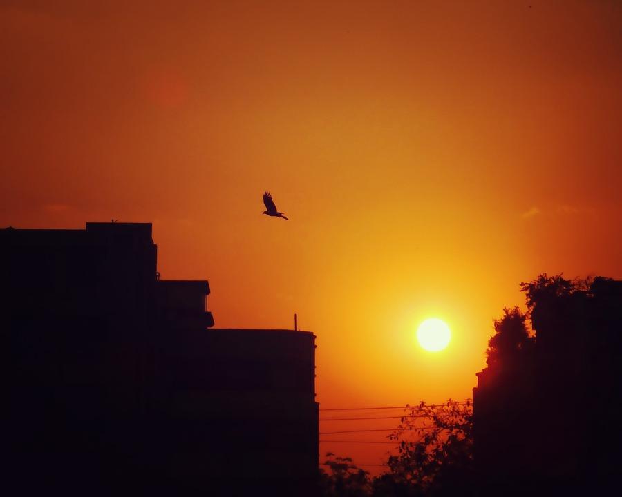 Bird, Sky, Sunset, City, Building, Urban