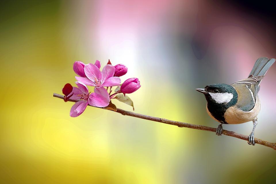 Bird, Tree, Nature, Sky, Branch, Wildlife, Landscape