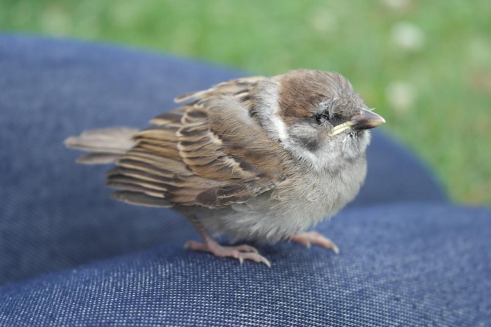 Sparrow, Bird, Wildlife, Young