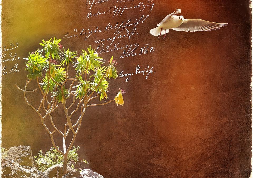 Spurge, Plant, Seagull, Bird, Font, Handwriting