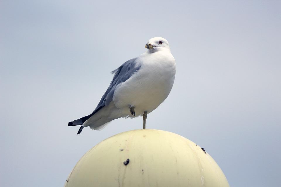 Pigeon, Bird, Standing, Wildlife, Nature, Wings