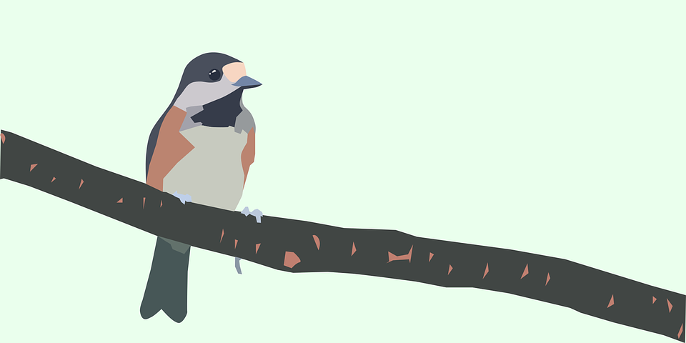 Bird, Branch, Tit