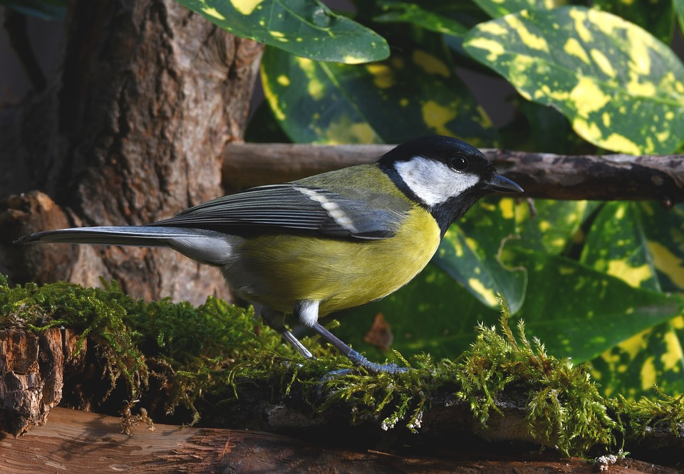 Titmouse, Bird, Forest, Plumage, Colors, Small, Yellow