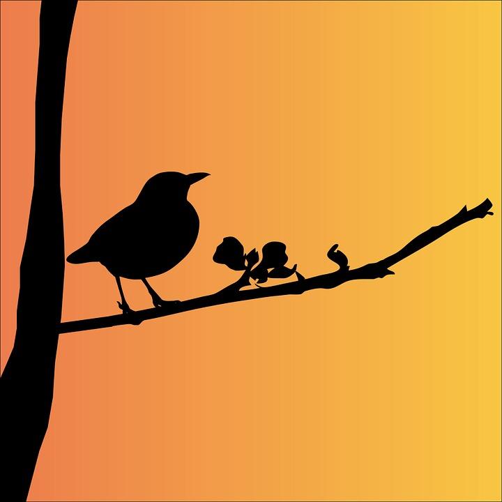 Blackbird, Bird, Animal, Black, Silhouette, Tree