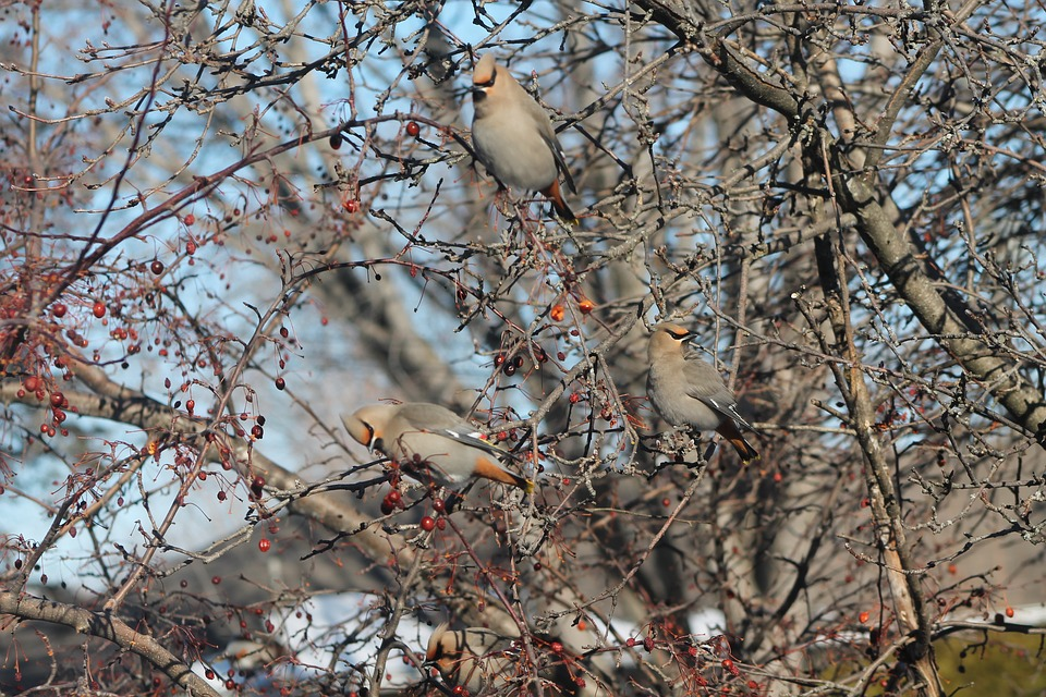 Birds, Fall, Tree, Branches, Nature, Autumn, Bird