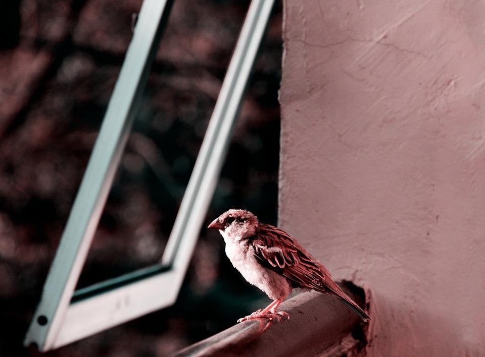 Bird, Housebird, Friend, Human, Friendly, Trust, Animal