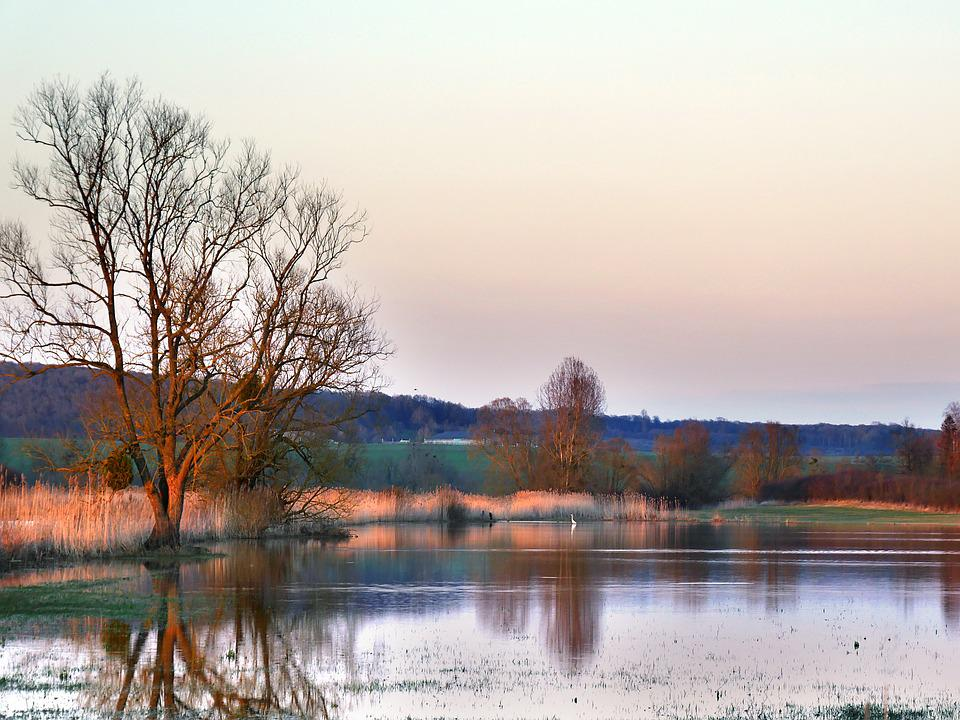 Field, Twilight, Orange, Bird, Crane, Landscape, Nature