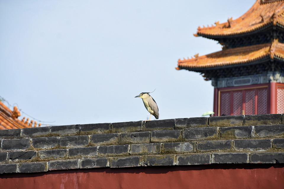 Wall, Bird, Background, Animal, Night Heron