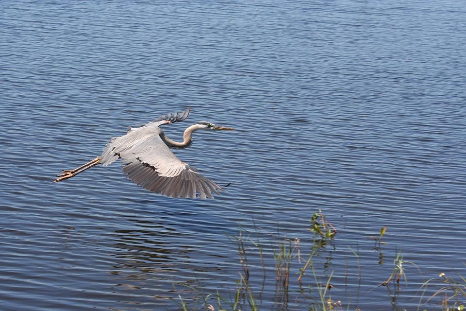 Water, Bird, Lake, Nature, Reflection