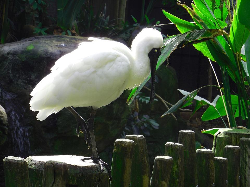 Crane, White Crane, Bird Watching, Nature, Bird