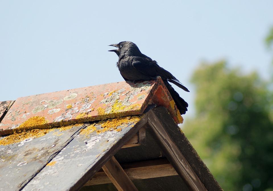 Crow, Perched, Bird, Wild, Dark, Raven