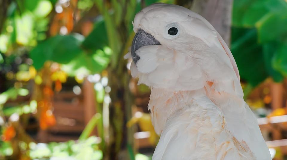 Bird, Nature, Animal, Wildlife, Outdoors