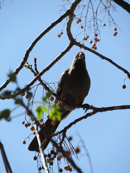 Bird, Animal, Wildlife, Branch, Perched, Nature