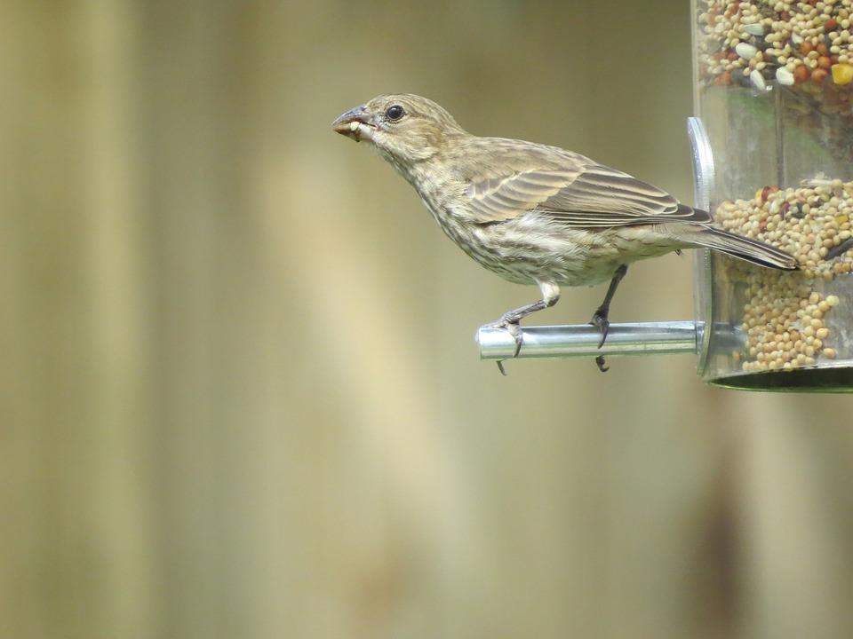 Bird, Brown And Tan, Wildlife