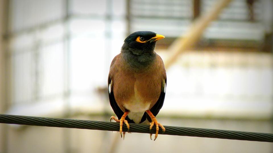 Bulbul, Bird, Wildlife