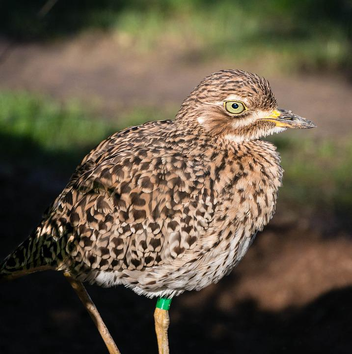 Bird, Zoo, Valencia, Nature, Wild, Wildlife, Feather