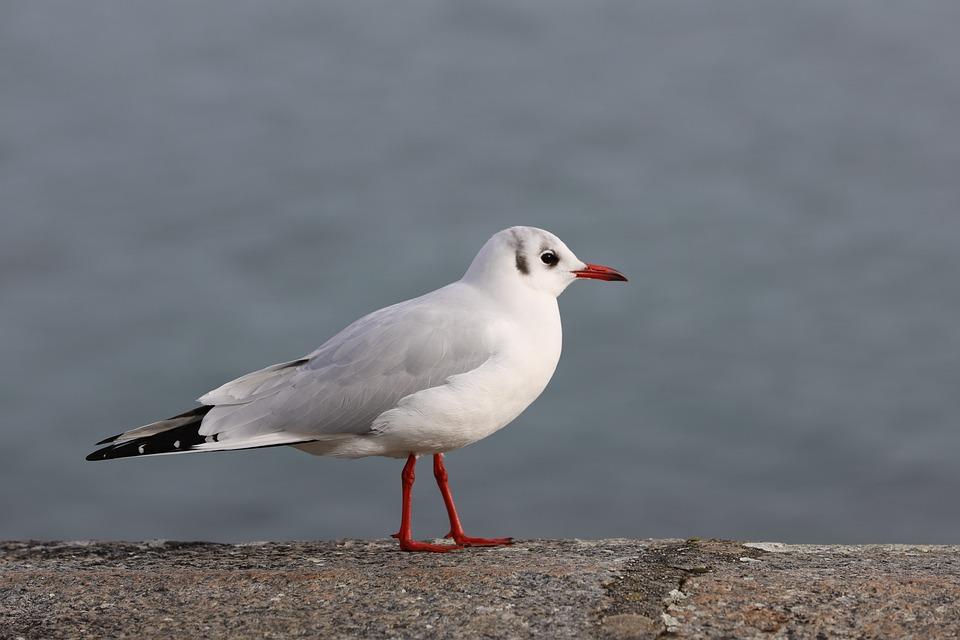 Bird, Wildlife, Nature, Outdoors, Lake, Geneva