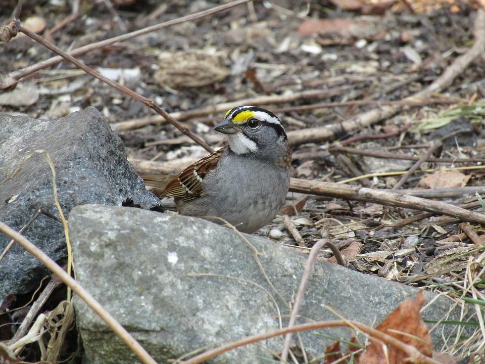 Nature, Wildlife, Bird, Animal, Outdoors, Little