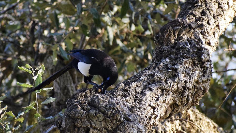 Birdphotography, Wildlife, Wildlifephotography, Bird