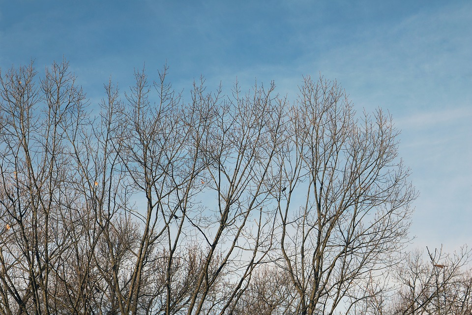 Winter, Sky, Tree, Bird, Landscape, Blue, Nature